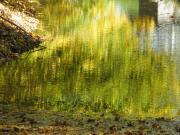Wagner Hajnal : Zöld függöny