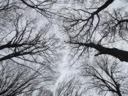 Vilics Eszter:  Nézz, nézz az ég felé!