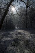 Klemencsics Sándor: Téli nap