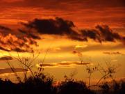 Vilics Eszter : Nézz, nézz az ég felé