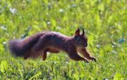Bedőcs Gyula: Hopp, egy mókus!
