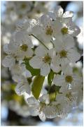 Wagner Hajnal: Virágba borulva