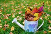 Vilics Eszter: Egy kannányi ősz