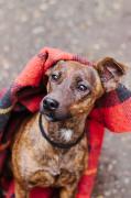 Gazsi Margaréta: Kutya egy hideg