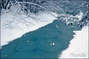 Károlyi Barnabás: Téli holtág